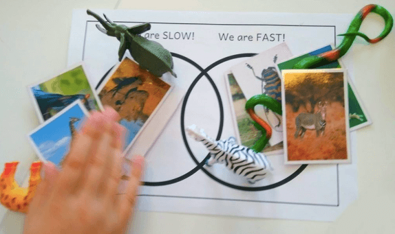 A fun activity using dinosaur toys.